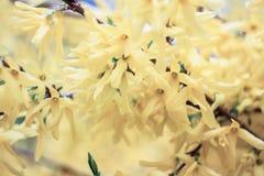Τρυφερά κίτρινα λουλούδια Στοκ Φωτογραφίες