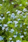 Τρυφερά λουλούδια άνοιξη Στοκ Φωτογραφίες