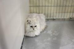 Τρυφερή γάτα Στοκ Φωτογραφία