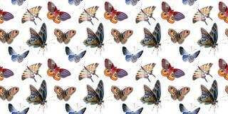 Τρυφερό έντομο πεταλούδων Watercolor, intresting σκώρος, απομονωμένη απεικόνιση φτερών ελεύθερη απεικόνιση δικαιώματος