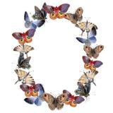 Τρυφερό έντομο πεταλούδων Watercolor, intresting σκώρος, απομονωμένη απεικόνιση φτερών διανυσματική απεικόνιση