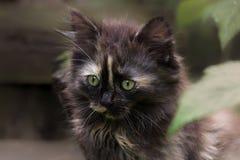 Τρυφερό γατάκι Στοκ Φωτογραφία