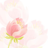 Τρυφερό υπόβαθρο με τα ρόδινα όμορφα λουλούδια 10 eps Στοκ Εικόνα