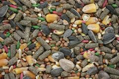 τρωκτικό μιγμάτων τροφίμων Στοκ φωτογραφίες με δικαίωμα ελεύθερης χρήσης