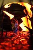 Τρωκτικό σε ένα μπάλωμα κολοκύθας Στοκ εικόνα με δικαίωμα ελεύθερης χρήσης