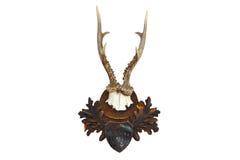 Τρόπαιο κυνηγιού Roebuck Στοκ Εικόνα