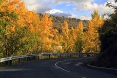 Τρόπος δέντρων Στοκ Εικόνες
