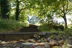 Τρόπος βημάτων βημάτων σκαλοπατιών επάνω επάνω να αφεθεί η χλόη δέντρων δέντρων Στοκ εικόνα με δικαίωμα ελεύθερης χρήσης