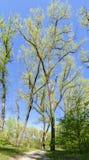 Τρόπος μέσω του δάσους άνοιξη στοκ φωτογραφία με δικαίωμα ελεύθερης χρήσης