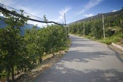 Τρόπος μεταξύ της φυτείας μήλων Στοκ φωτογραφία με δικαίωμα ελεύθερης χρήσης