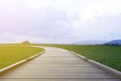 Τρόπος περιπάτων με τον πράσινο κήπο χλόης Στοκ εικόνα με δικαίωμα ελεύθερης χρήσης