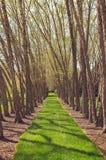 Τρόπος πορειών μέσω των δέντρων στοκ φωτογραφία