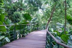 Τρόπος πορειών στο βοτανικό κήπο Στοκ φωτογραφία με δικαίωμα ελεύθερης χρήσης