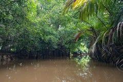 Τρόπος σε Kayaking τραγουδημένη στη Klong Nae, Thailand& x27 s μικρός Αμαζόνιος Στοκ Εικόνα