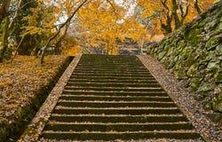 Τρόπος σκαλοπατιών το φθινόπωρο Στοκ φωτογραφίες με δικαίωμα ελεύθερης χρήσης