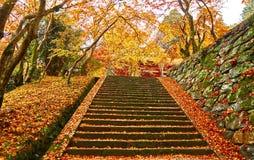 Τρόπος σκαλοπατιών το φθινόπωρο Στοκ φωτογραφία με δικαίωμα ελεύθερης χρήσης