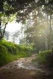 Τρόπος στην αιχμή του μικρού Adam Τοπίο βουνών στη Σρι Λάνκα, η μέγιστη Ella του μικρού Adam, Σρι Λάνκα στοκ φωτογραφίες με δικαίωμα ελεύθερης χρήσης