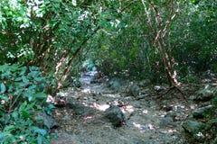 Τρόπος στην πράσινη ζούγκλα στην Ταϊλάνδη Στοκ Εικόνες