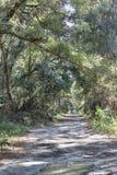 Τρόπος στο δάσος στοκ φωτογραφία με δικαίωμα ελεύθερης χρήσης