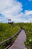 Τρόπος στο δάσος μαγγροβίων πύργων στο δασικό εθνικό πάρκο Pranburi, Prachuap Khiri Khan, Ταϊλάνδη στοκ εικόνα