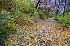 Τρόπος στο πάρκο φθινοπώρου Στοκ φωτογραφίες με δικαίωμα ελεύθερης χρήσης