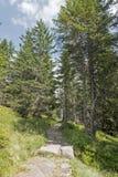 Τρόπος στο φυσικό δάσος Στοκ εικόνα με δικαίωμα ελεύθερης χρήσης