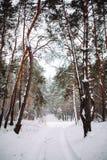 Τρόπος στο χιονισμένο δάσος Στοκ Εικόνες