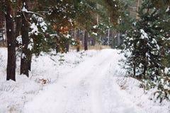 Τρόπος στο χιονισμένο δάσος Στοκ εικόνα με δικαίωμα ελεύθερης χρήσης