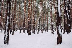 Τρόπος στο χιονισμένο δάσος Στοκ Εικόνα