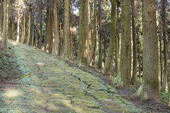 Τρόπος Cobbled στο δάσος Στοκ φωτογραφία με δικαίωμα ελεύθερης χρήσης