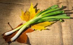 τρόφιμα αγροτικά Στοκ Εικόνες