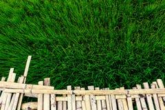 Τρόφιμα Ασία Ταϊλάνδη φύσης εγκαταστάσεων τομέων ρυζιού Στοκ εικόνα με δικαίωμα ελεύθερης χρήσης