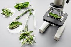 Τρόφιμα ασφάλειας Εργαστήριο για την ανάλυση τροφίμων Χορτάρια, πράσινα κάτω από το μικροσκόπιο στην γκρίζα τοπ άποψη υποβάθρου στοκ εικόνα