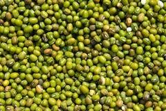 Τρόφιμα και λαχανικό - κλείστε επάνω Mung το αφηρημένο υπόβαθρο φύσης φασολιών Στοκ Εικόνα