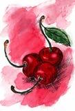 Τρόφιμα σκίτσων watercolor οπωρωφόρων δέντρων κλάδων κερασιών ελεύθερη απεικόνιση δικαιώματος