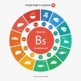 Τρόφιμα υψηλά στη βιταμίνη B5 διανυσματική απεικόνιση