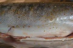 Τρόφιμα ψαριών Στοκ εικόνες με δικαίωμα ελεύθερης χρήσης