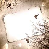 τρύγος άνοιξη πουλιών ανασκόπησης απεικόνιση αποθεμάτων