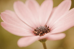 Τρύγος λιβαδιών λουλουδιών αναδρομικός Στοκ Φωτογραφία