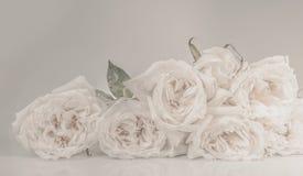 Τρύγος λουλουδιών που έγινε με τα φίλτρα χρώματος Στοκ Εικόνες