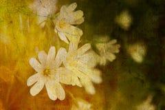 τρύγος λουλουδιών Στοκ εικόνα με δικαίωμα ελεύθερης χρήσης