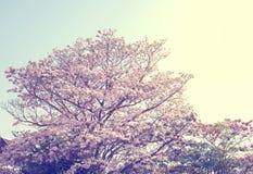 Τρύγος λουλουδιών δέντρων την άνοιξη Στοκ Φωτογραφίες