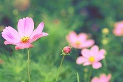 Τρύγος λουλουδιών κόσμου Στοκ φωτογραφία με δικαίωμα ελεύθερης χρήσης