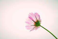 Τρύγος λουλουδιών κόσμου Στοκ Εικόνα