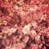 Τρύγος λουλουδιών Sakura fack stye Στοκ Φωτογραφίες