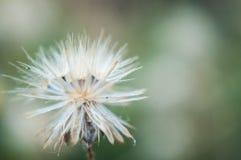 Τρύγος του λουλουδιού χλόης Στοκ Φωτογραφίες