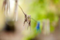 Τρύγος clothespin Στοκ Εικόνες