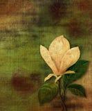 τρύγος magnolia Στοκ φωτογραφία με δικαίωμα ελεύθερης χρήσης