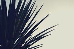 Τρύγος - palmtree Στοκ Εικόνες
