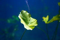 Τρύπα αποχέτευσης Cenote waterplants σε Riviera Maya Στοκ Εικόνες